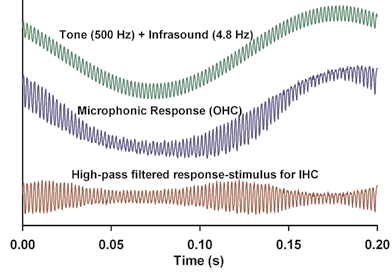 Figure 2: Demonstration of biologically-generated amplitude modulation to a non-modulated stimulus consisting of an audible tone at 500 Hz tone summed with an infrasonic tone at 4.8 Hz. The cochlear microphonic response, which is generated by the OHC, includes low and high frequency components. The IHC detect only the high frequency component, which is amplitude modulated at twice the infrasound frequency for the stimuli in this example.