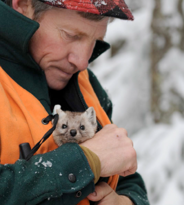 GAME BIOLOGIST WITH AMERICAN MARTEN - Photo by Roger Irwin